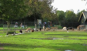 Komende zomer kan men in Brummen blijven genieten van het dierenpark 't Goor